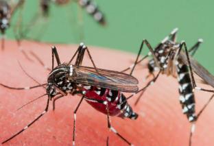 डेंगु नियन्त्रणका लागि प्रभावकारी कदम चाल्न स्थानीय बासिन्दाको दबाब