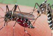 चितवनमा डेंगु परीक्षणको कीट अभाव