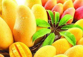 फलको राजा आँपः प्रोटिन, भिटामिन, खनिज, कार्बोहाइड्रेडको स्रोत