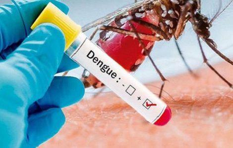 डेंगुबाट हालसम्म ४ जनाको मृत्यु, ४२ जिल्ला संक्रमणको जोखिममा