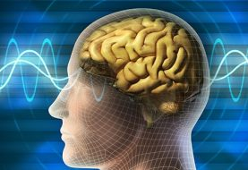 यसरी बदल्न सकिन्छ मानव मस्तिष्कलाई......