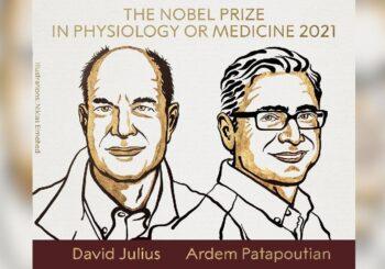 स्नायु प्रणाली सम्बन्धी खोज गरेका डेभिड र अर्डेमलाई २०२१ को चिकित्सातर्फको नोबेल पुरस्कार